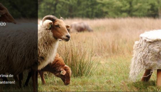 Herders van Balloo: Schapenscheerdersfestival & Wolfeest 11-12 juli 2020
