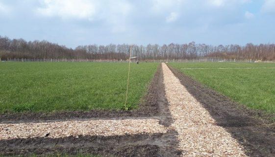 25 maart - celtic field stroken met klein fruit