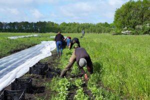 De oogstgroep hard aan het werk