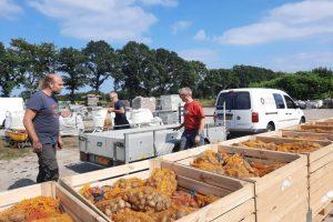4 sep - aardappels gerooid